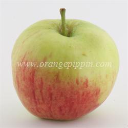 fameuse-apple